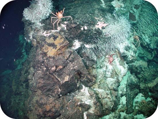 Teaching Ocean ecosystems