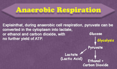 Anaerobic Respiration