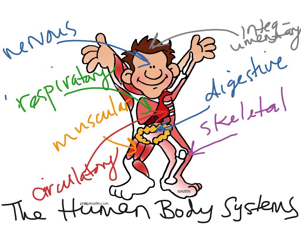 Human Body Ck 12 Foundation
