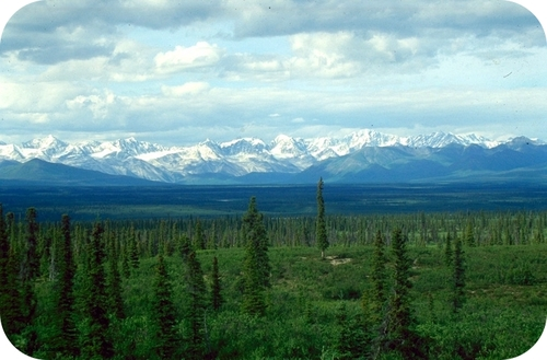 Taiga is characterized by evergreen forests in the subarctic regions, and covers large areas of northern North America and Eurasia