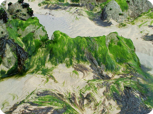 Close up of algae on a beach