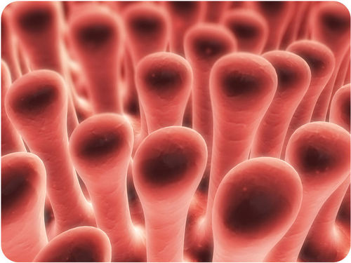 Magnified image of villi