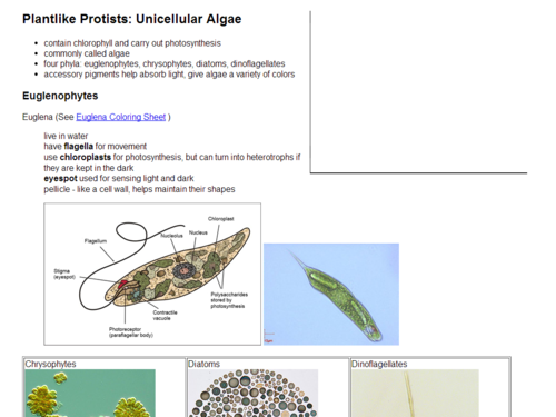 Plant-like Protists: Unicellular Algae