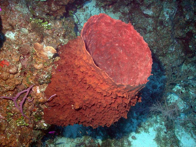Sponges Read Biology Ck 12 Foundation