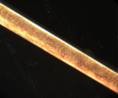 Single shaft of human hair