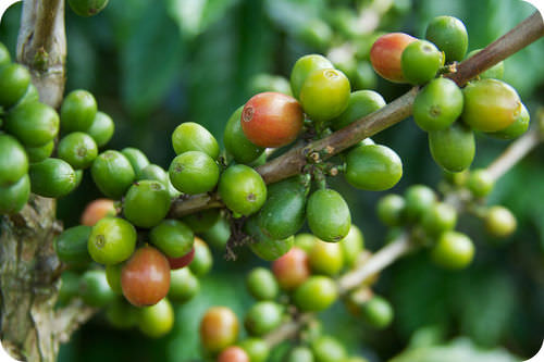 Color vision may have developed to help our ancestors distinguish between ripe and unripe fruits