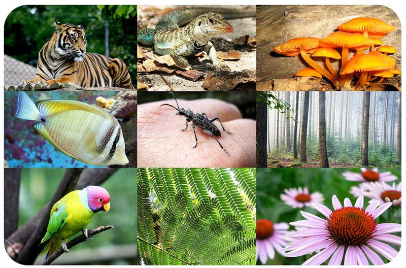 Biodiversity Read Biology Ck 12 Foundation