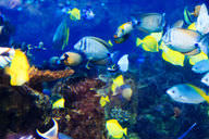 In a marine ecosystem, coral, fish, and other sea life depend on each other for survival