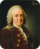 Portrait of Carl Linnaeus, the inventor of modern taxonomy