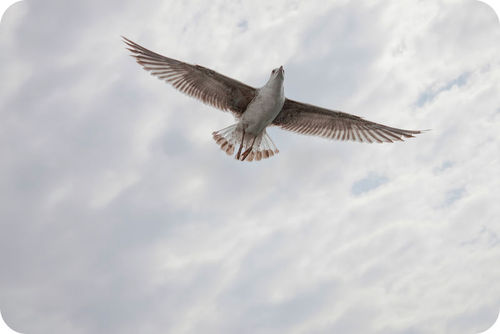 One bird's flight, as seen in a seagull