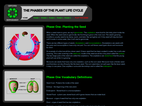 The Phases of the Plant Life Cycle