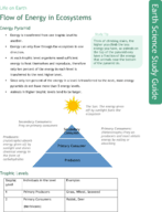 Flow of Energy in Ecosystems Study Guide