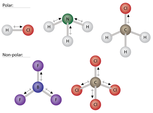 Examples of polar and nonpolar molecules