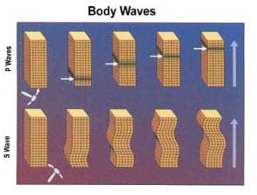P-waves and S-waves are the two types of body waves