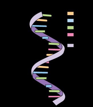 Codons in RNA