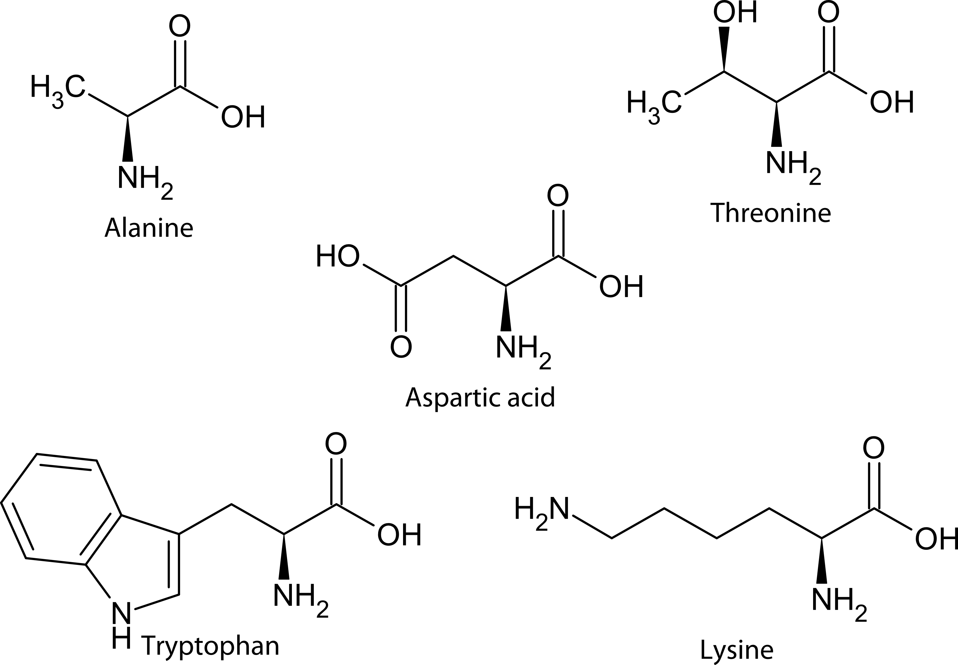 Structure of five biologically relevant amino acids