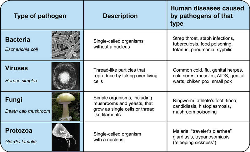 Various pathogens, including E Coli, death cap mushrooms, Giarda lambia, and Herpes simplex