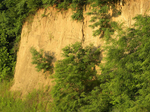 Loess deposits can form steep cliffs