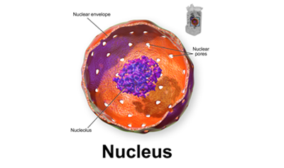 Atomic Nucleus Ask Answer Learn Table