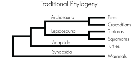 Reptilian phylogenetic tree