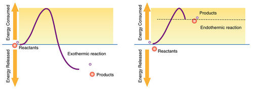 Energy and Biochemical Reactions ( Read ) | Biology | CK-12