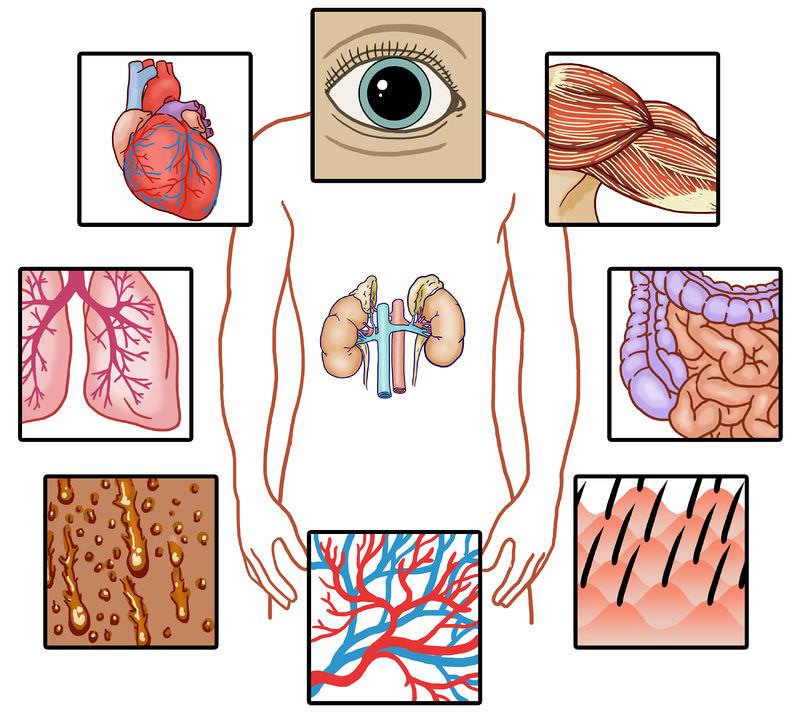 Cell Communication Read Biology Ck 12 Foundation