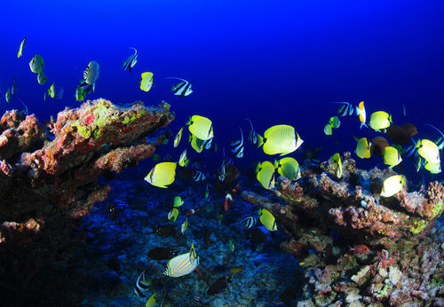 Coral reefs are among the most densely inhabited and diverse areas on the globe