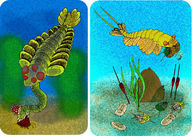 History of Paleozoic Life