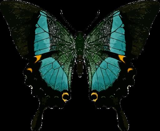 Resultado de imagen de La simetría de la mariposa
