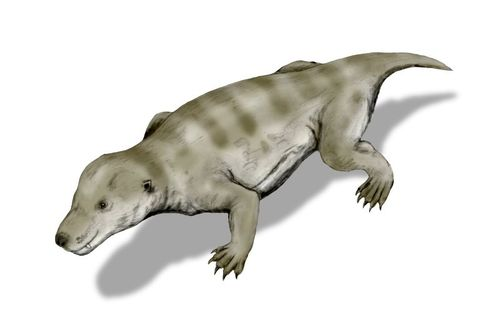 Cynodont illustration: mammalian ancestor