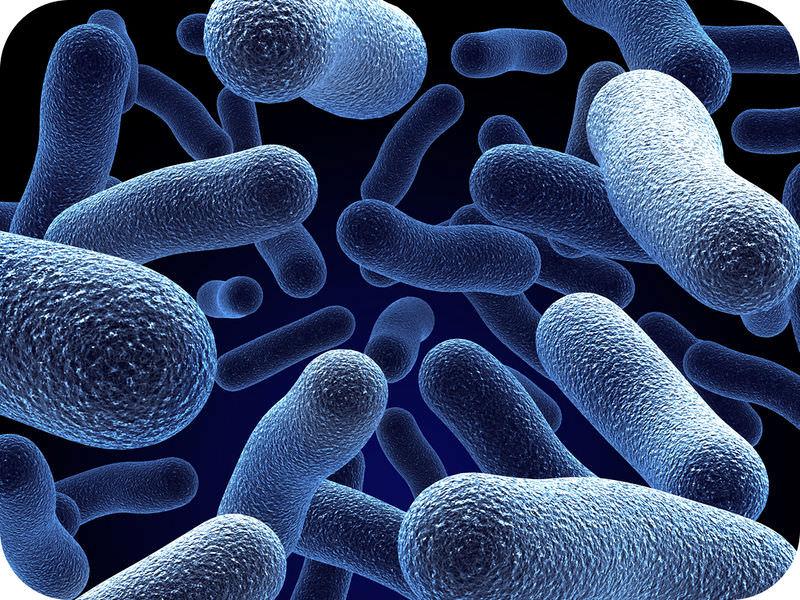 Prokaryotic And Eukaryotic Cells Read Biology Ck 12 Foundation