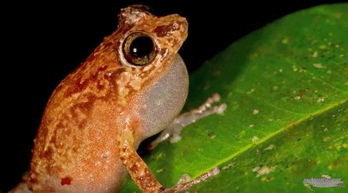 Amphibian Behavior and Diversity