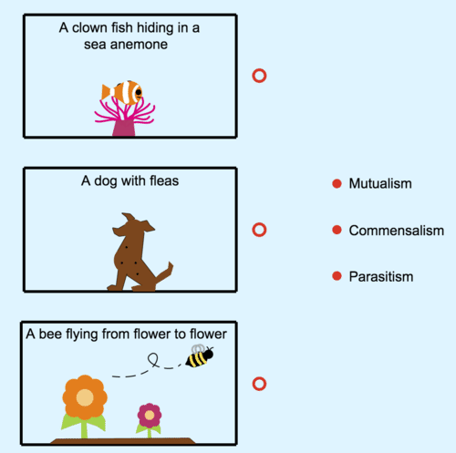 Symbiosis: Mutualism, Commensalism and Parasitism