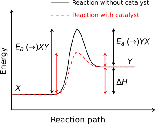 While a catalyst changes activation energy, enthalpy remains unchanged