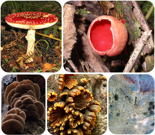 Picture showing the diversity in fungi