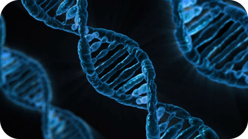 DNA, the Genetic Material