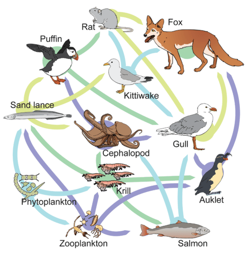 the water cycle diagram labeled food chains and food webs read biology ck 12 realistic the water cycle diagram