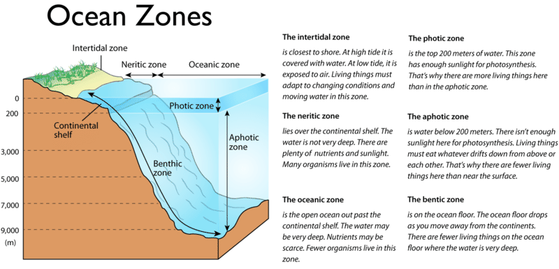 Ocean Zones Read Earth Science Ck 12 Foundation