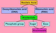 Nucleic Acid Classification Quiz - MS PS