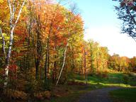 The deciduous forests of Vermont begin to lose their leaves in the fall