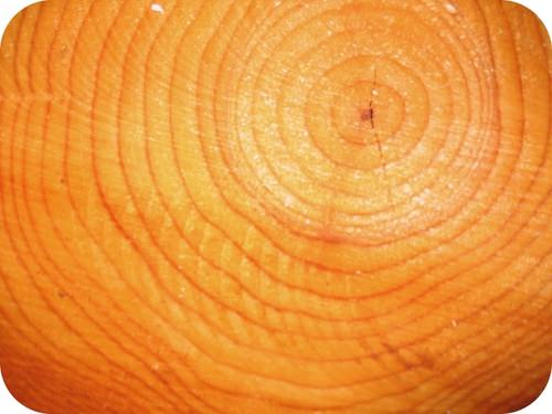 Cross-section of a tree showing growth rings
