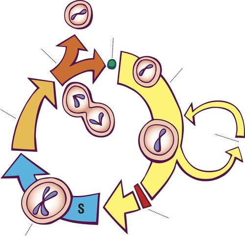 Cell Cycle Regulation - Advanced