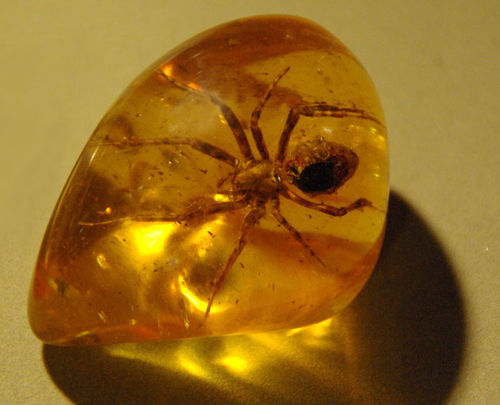 Complete Preservation. This spider looks the same as it did the day it died millions of years ago