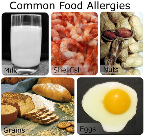 Common allergic foods: milk, shellfish, grains, egg, nuts