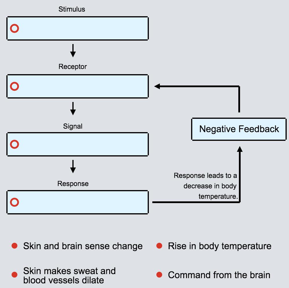 Homeostasis And The Human Body Advanced Ck 12 Foundation