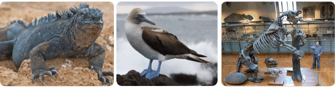 Animals in the Galapagos: giant marine iguana, blue-footed booby, giant ground sloth