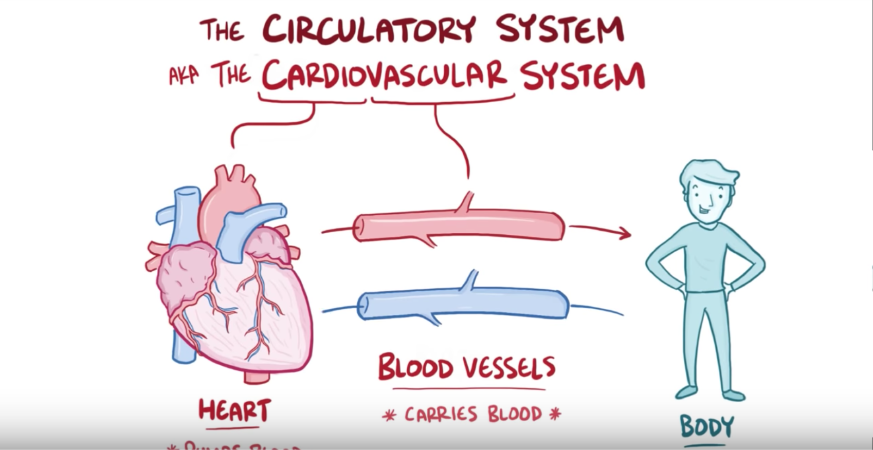 Pulmonary And Systemic Circulations Advanced Ck 12 Foundation Heart Diagram Click For Details Show Me A Of The Human Anatomy Physiology Circulatory System