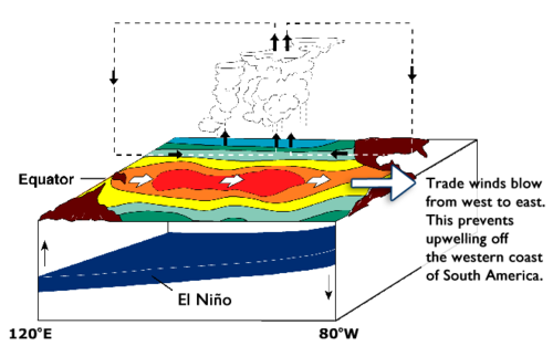 Diagram of the Pacific Ocean during an El Nino year