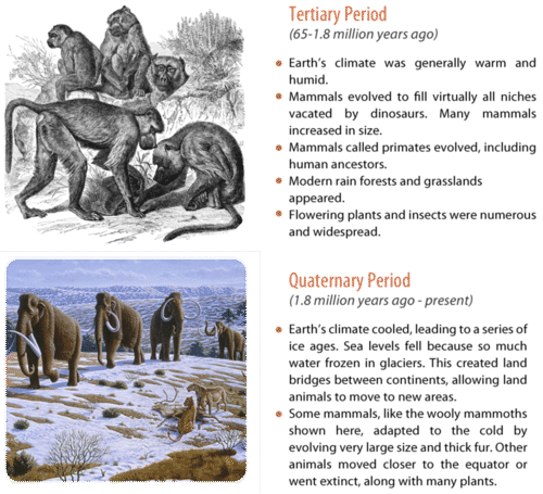 The Cenozoic Era consists of the Tertiary and Quaternary periods