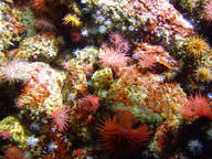 Coral reefs are very beautiful and very diverse